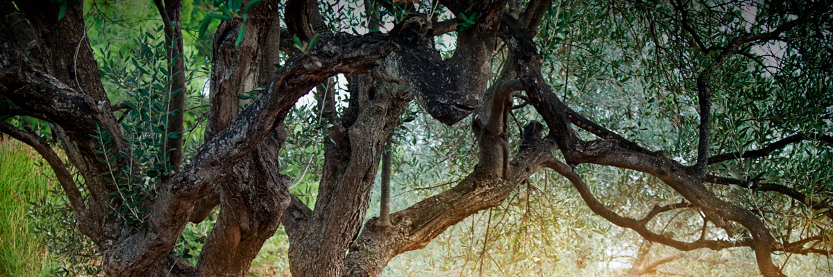 Aceite Priego de Córdoba, Denominación de Origen